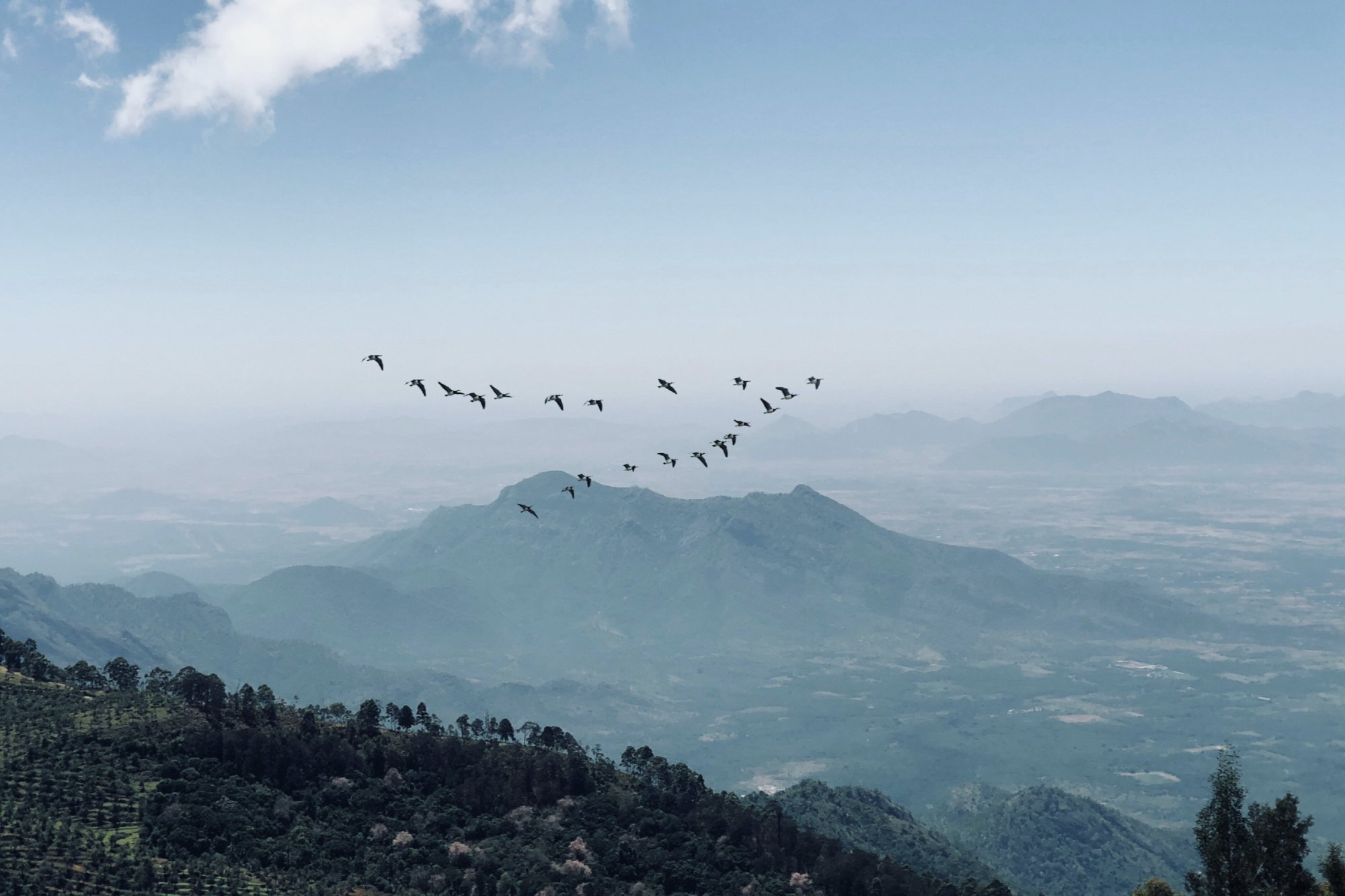 Picture of birds flying signifying influence.