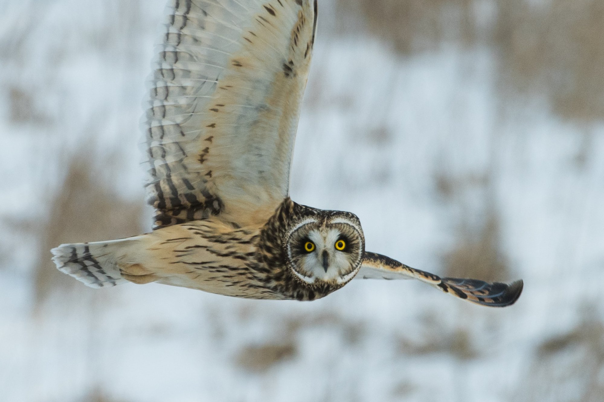 An owl flying signifying steadiness.