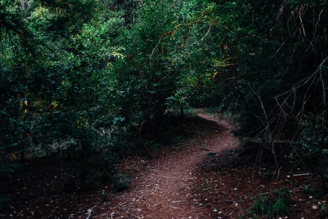 A picture of a forest trail.