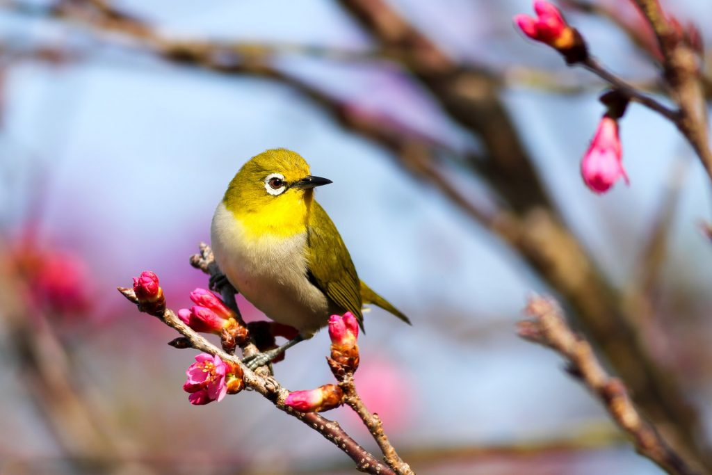 Photo of a yellow bird sitting in a tree branch.
